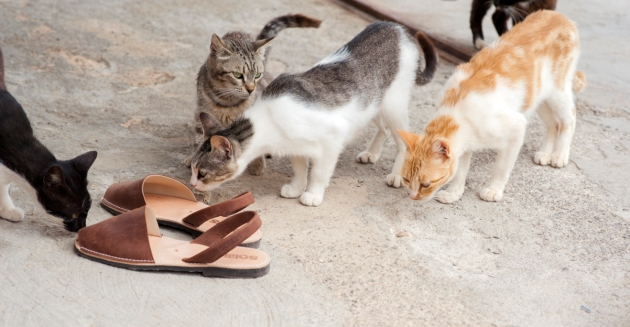 Curious cats at Sa Caleta Cove, Ibiza